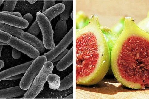 como matar bacteria no estomago