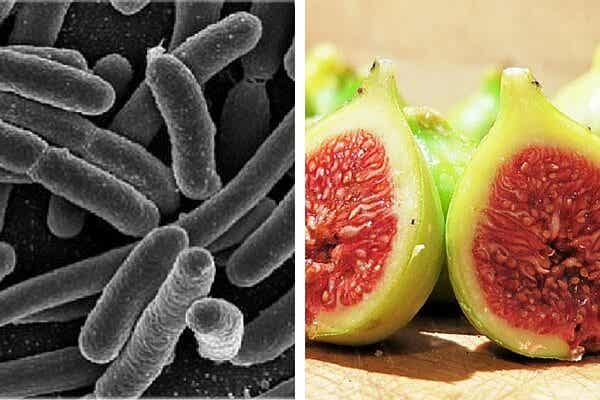 Eliminar bacterias del estómago con un eficaz tratamiento con higos