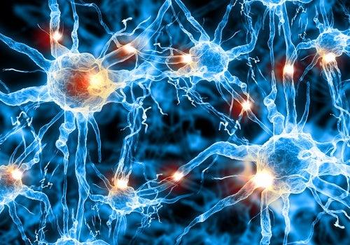 Imagen de neuronas