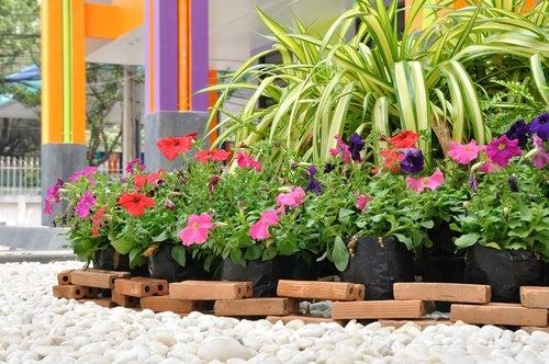 Mejorar el aspecto del jardín