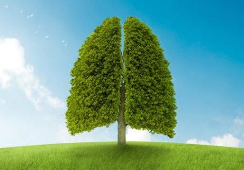 Árbol con forma de pulmones