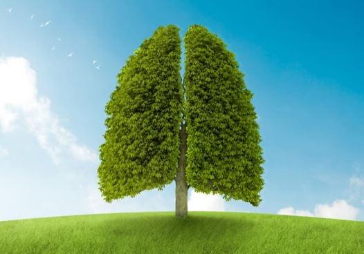Dieta para desintoxicar tus pulmones