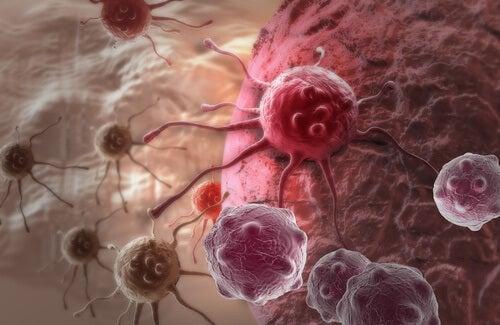 Espinaca tiene acción anticancerígena