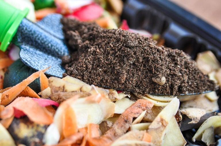 4 fertilizantes ecológicos para nutrir tus plantas