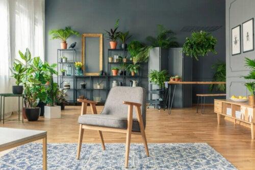 5 plantas de interior que podrían ser peligrosas