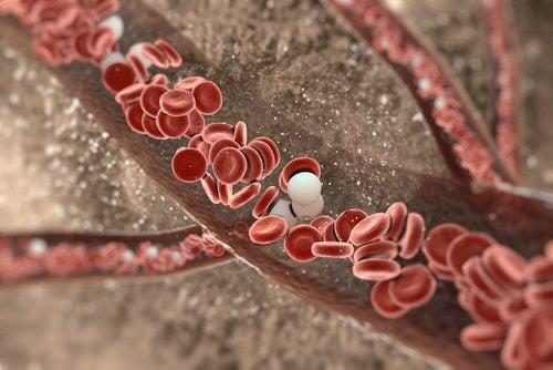 arterias