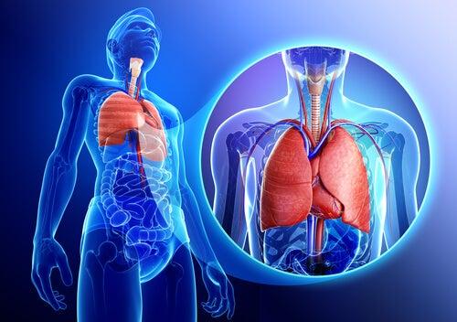 Cómo fortalecer el sistema respiratorio de manera natural