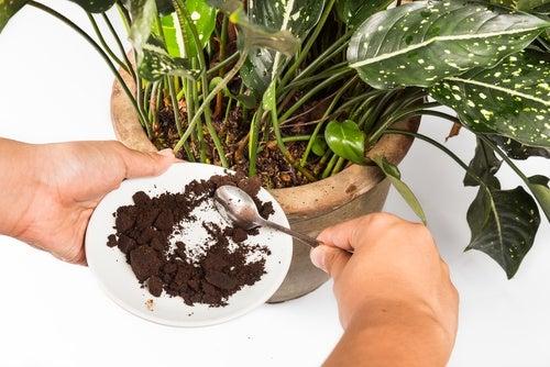 Fertilizante orgánico a base de restos de café