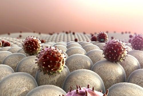 Fortalece el sistema inmunológico