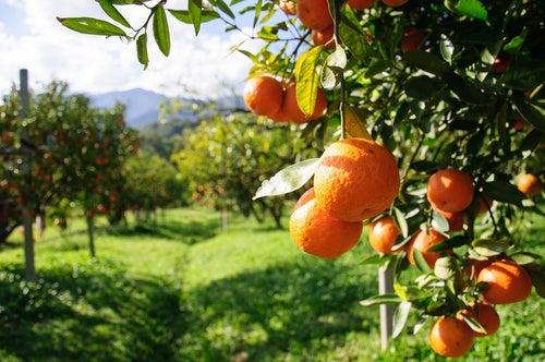 Saciar la sed y el apetito con frutas