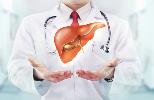 Médico con una ilustración de un hígado en las manos.