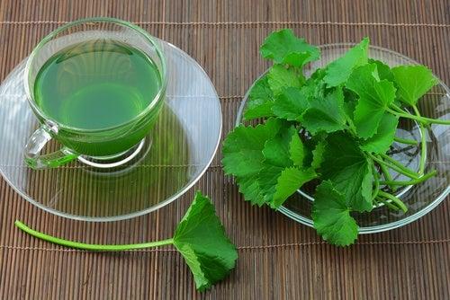 Preparar un té de apio es muy sencillo y saludable.