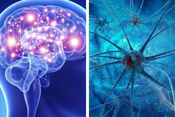 9 hábitos que matan las neuronas y afectan la salud cerebral