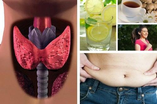 que puedo tomar para bajar de peso teniendo hipotiroidismo