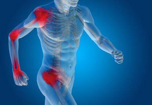 Los cartílagos y ligamentos del cuerpo
