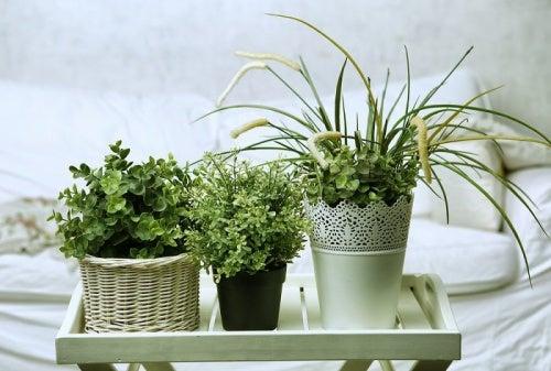 5 plantas para conciliar el sueño que puedes poner en tu habitación