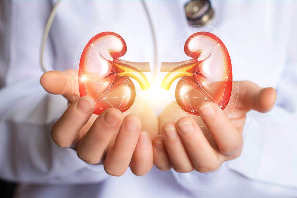 7 consejos clave para cuidar los riñones