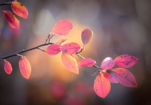 hojas rosadas representando el pasado