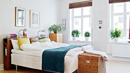 plantas para conciliar el sueño 3