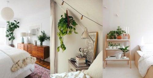 plantas para conciliar el sueño