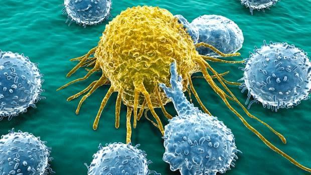 Se crea una molécula que será capaz de tratar el cáncer de ovario y de páncreas