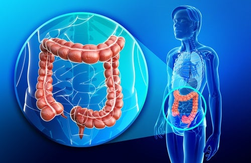 Imagen del intestino