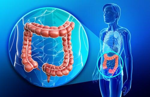 Mejora la salud intestinal