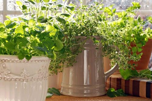 Tomillo con otras plantas. Fungicida como beneficio del tomillo.