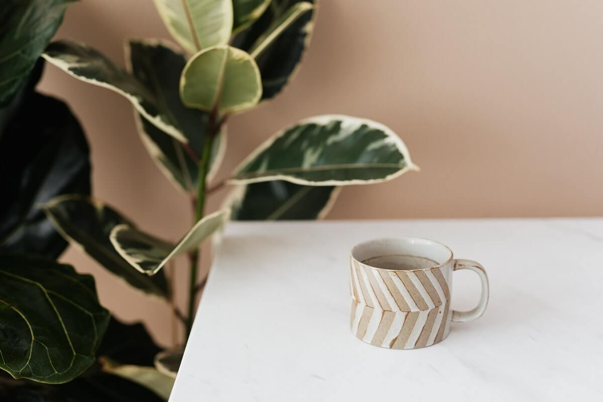 Café verde, um poderoso antioxidante