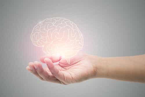 5 hábitos sencillos para regenerar tus neuronas (neurogénesis)
