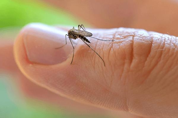 La OMS declara emergencia sanitaria global por el virus del Zika