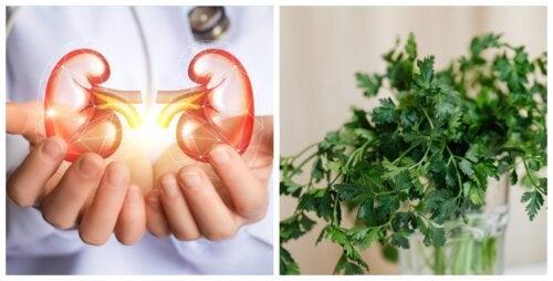 Depura tus riñones con agua de perejil