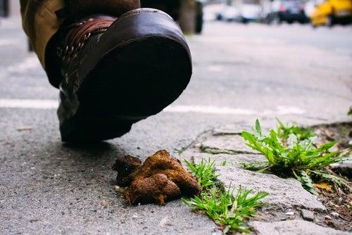 debeLa gran cantidad de bacterias en el calzado puede deberse al contacto frecuente que tiene con la materia fecalen la calle
