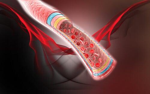 4 remedios naturales para la circulación sanguínea