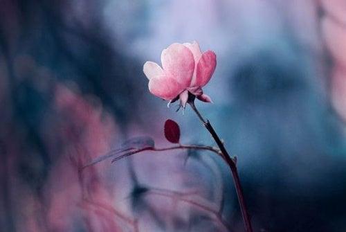 flor que representa el tiempo