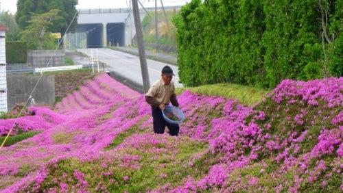 japones-cultivando-flores