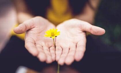 Palmas de manos enseñando una flor amarilla.