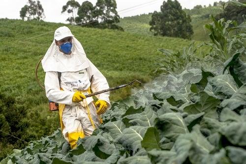 Qué son los pesticidas y qué provocan