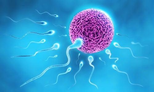 Se puede quedar embarazada durante el periodo