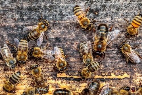 Conjunto de abejas sobre madera