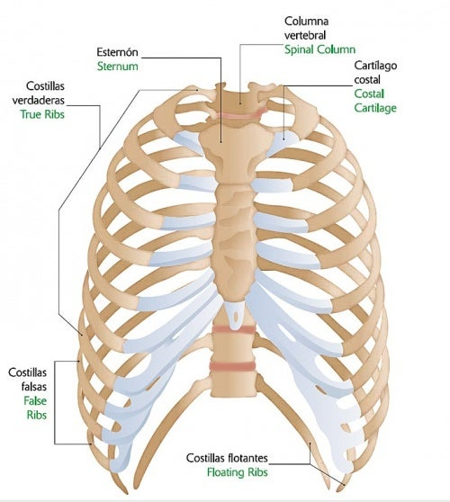 desgarro muscular entre las costillas