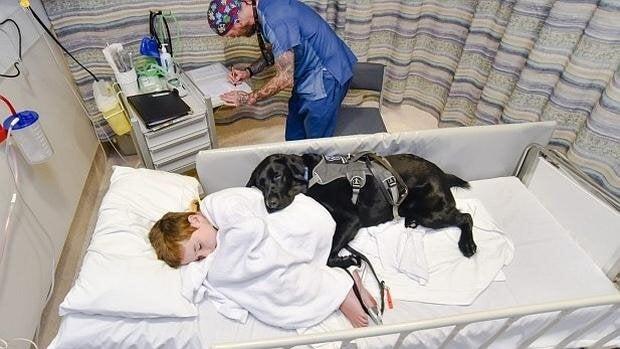 Mahe, el perro y amigo que cuida de su niño con autismo