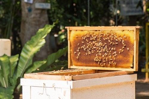 Panal de abejas de apicultor