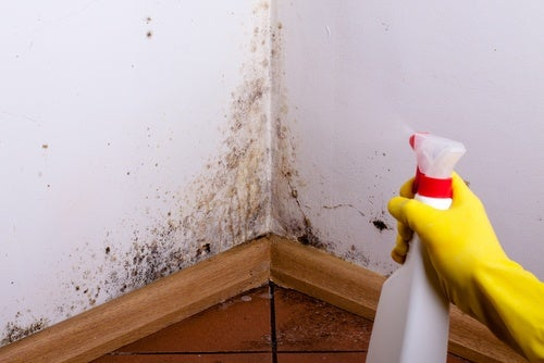 A hand spraying mold on walls