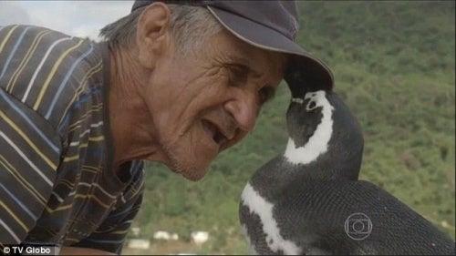 pinguino-brasileño