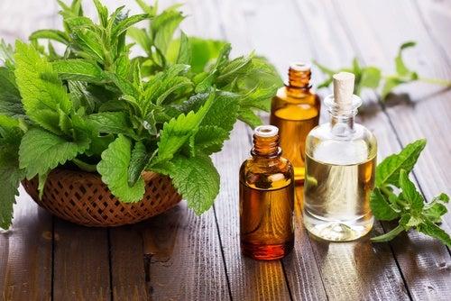 Aceite esencial de menta para tratar las varices