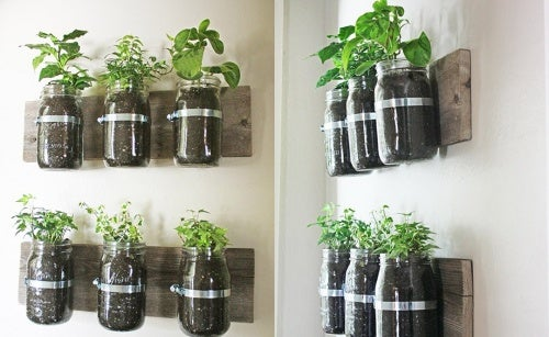 Botellas-plantas
