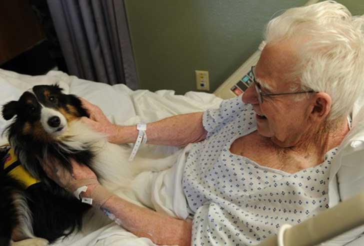 Descubre el hospital donde se permite a las mascotas visitar a sus dueños