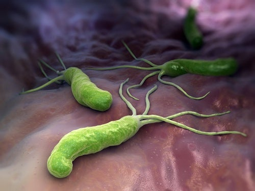 Helicobacter pylori, la bacteria que causa gastritis