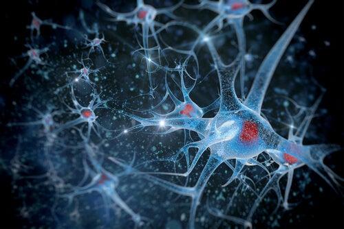Previene las enfermedades neurodegenerativas